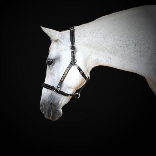 licol personnalisable cheval