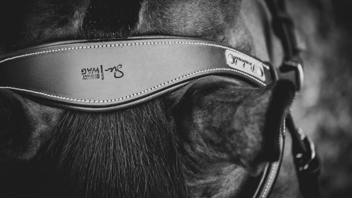 bridon cheval personnalisable